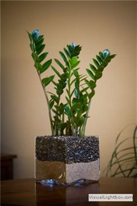 plants that need no sunlight 1000 images about indoor green plants on pinterest