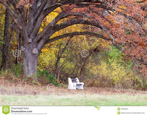 bench under tree park bench under a tree stock image image of landscape