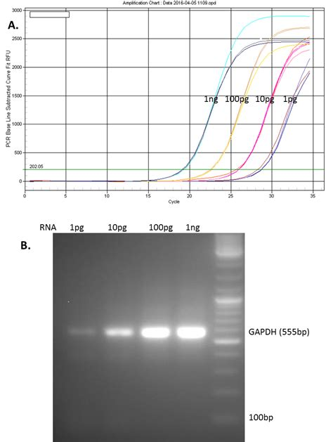 qpcr template all in one qpcr mix and validated primers genecopoeia