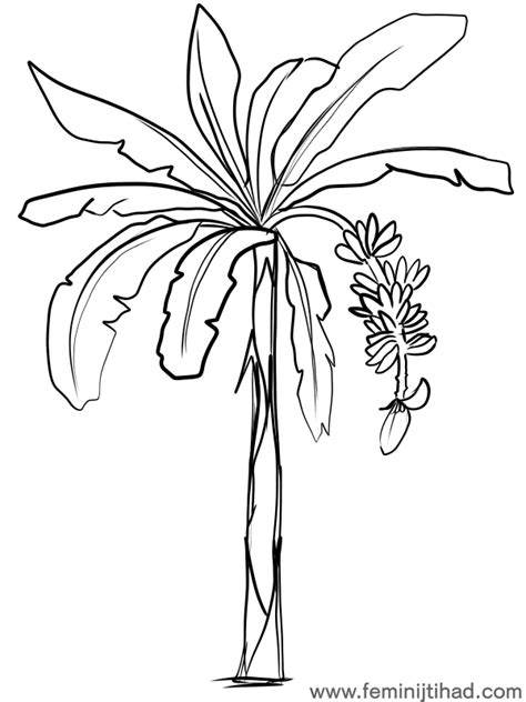 coloring page banana tree banana coloring pages to print coloring pages for kids