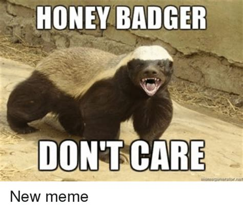 Badger Memes - funny honey memes of 2017 on sizzle corner