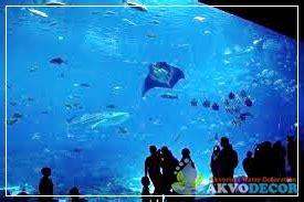 Jual Set Snorkel Eksplorasi Keindahan Biota Laut aquarium induk aquarium air laut