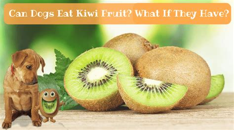 can dogs eat apricots can dogs eat kiwi fruit what if they