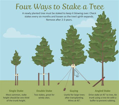 best tree to plant in backyard selecting the right tree for your garden fix com