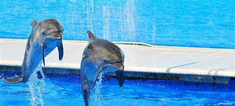 vasca privazione sensoriale quello che devi sapere sui delfinari la dolphin