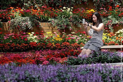 sentosa new year flower exhibition singapore sentosa flower show in bloom