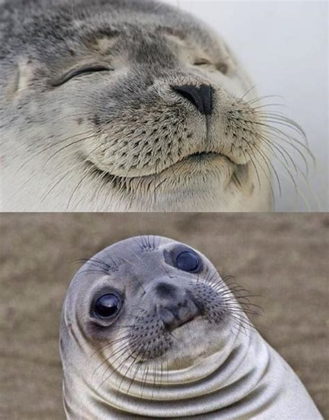 Seal Meme - short satisfaction vs truth memes imgflip