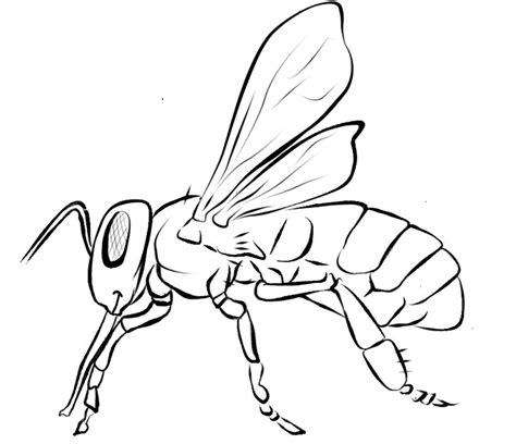 Honey Bee Coloring Page 23 Free Bee Clip Art Drawings And Colorful Images by Honey Bee Coloring Page