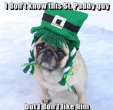 St Pattys Day Meme - memes images funny st patrick s day pug dog meme