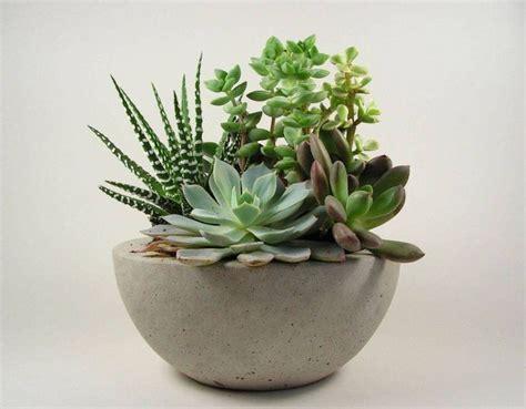 concrete succulent planter concrete bowl light grey succulent bowls planters and
