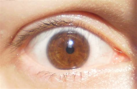 honey eye color my eye lightening journey just another site