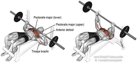 should i do decline bench build muscle gym
