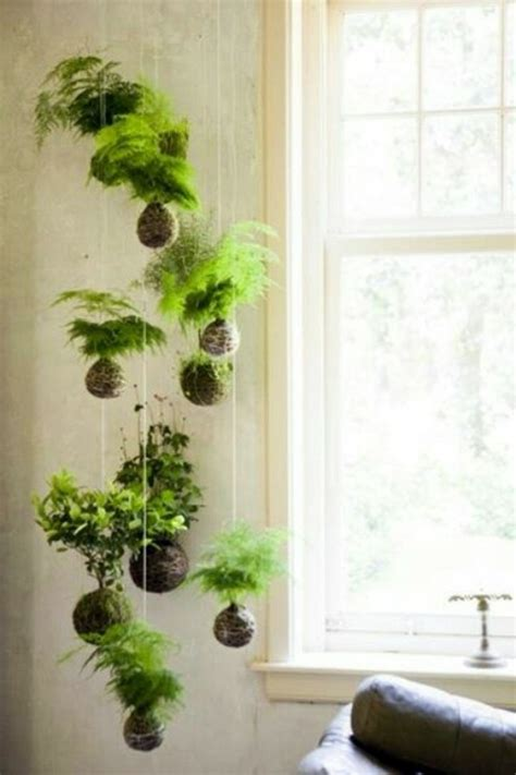 best indoor hanging plants indoor hanging plants www pixshark com images