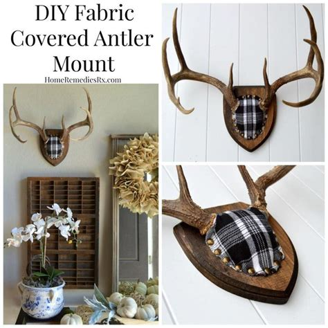 homemade europe diy design genius 25 best ideas about deer mounts on pinterest euro
