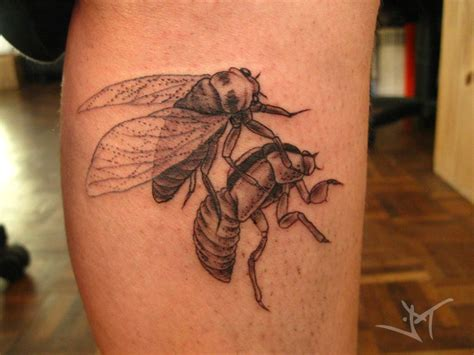 cicada tattoo meaning cami cicada by janaina deviantart tattoos