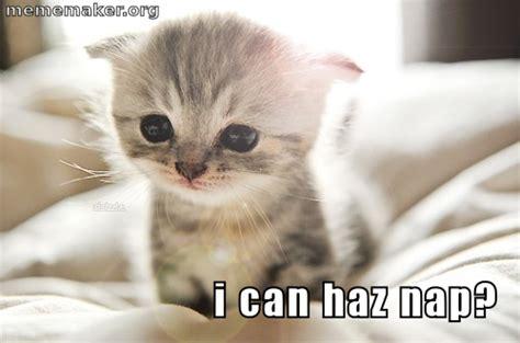 Sleeping Cat Meme - sleeping cat memes image memes at relatably com