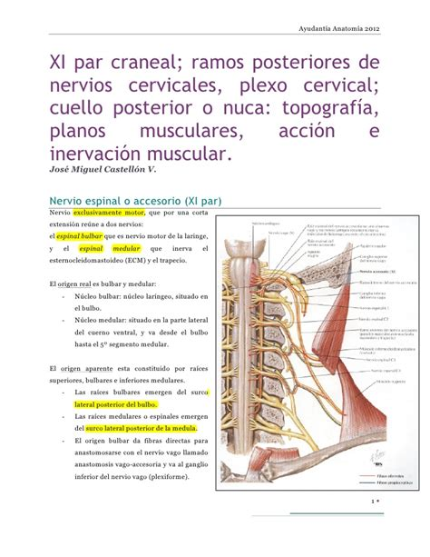 cuales son las cadenas ganglionares del cuello xi par craneal ramos posteriores de nervios cervicales