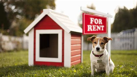 puppy for rent make money from your home realtor 174