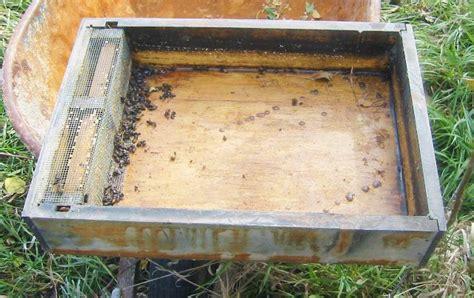 beekeeping feeding
