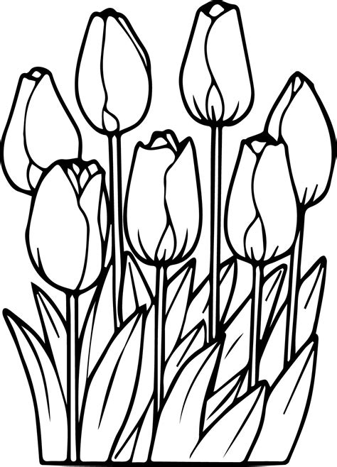 coloring page tulip flower tulip coloring pages coloringsuite com