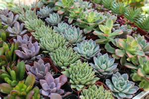non flower centerpieces succulents alilovesweddings