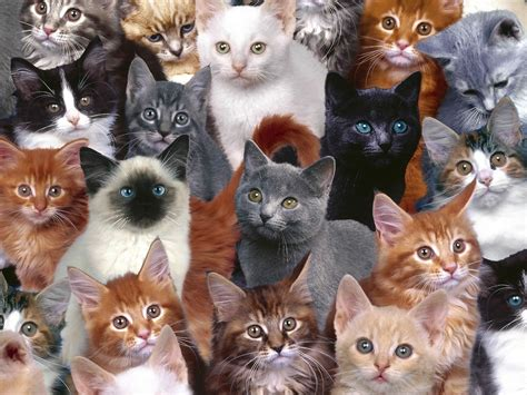 wallpaper crazy cat kitty world free cute kitten pictures