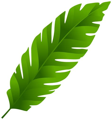 Single green leaves clipart png clipartxtras
