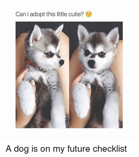where can i adopt a can i adopt this cutie a is on my future checklist dogs meme on sizzle