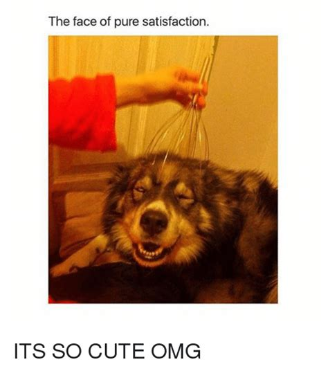 So Cute Meme Face - the face of pure satisfaction its so cute omg cute meme