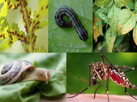 garden pests problems solutions food and thought