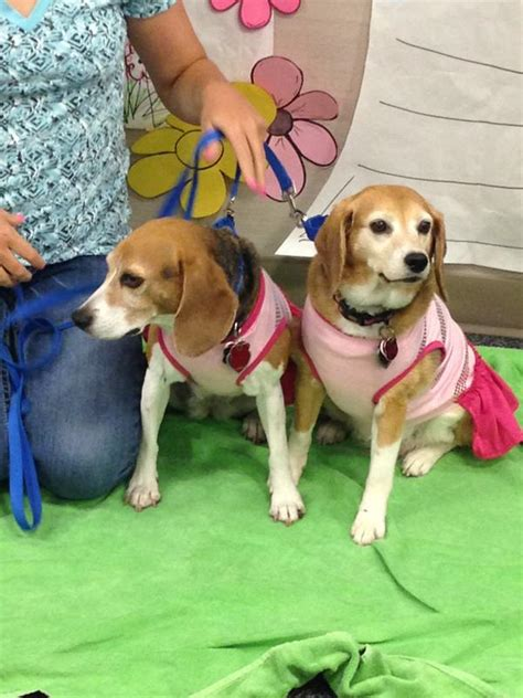 best therapy dogs therapy dogs dressed in summer best scrubbing in