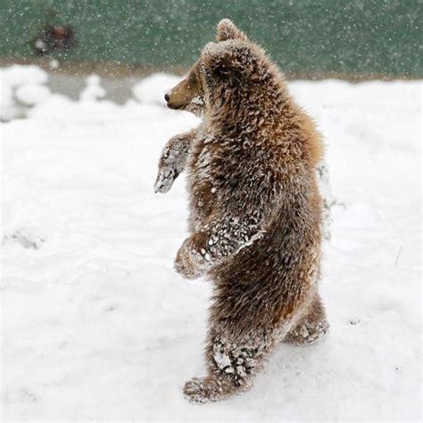 animals in the winter 01i winter animals 12 10