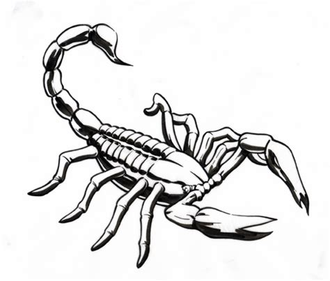 scorpion clipart scorpion deawing clipart best