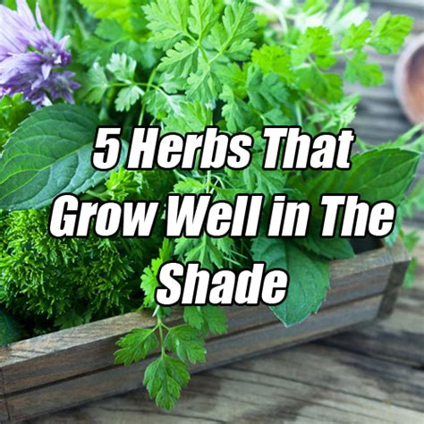 plants that do well indoors plants that grow well indoors 28 images plants herbs