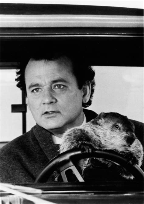 groundhog day fred groundhog
