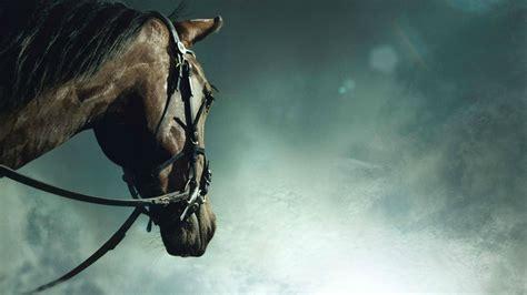 Wallpaper Hd 1920x1080 Horses | horses hd wallpapers horse desktop wallpapers 1080p hd