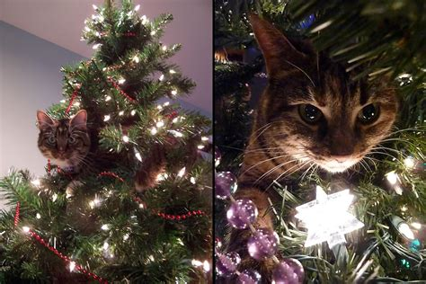 cat christmas tree memes