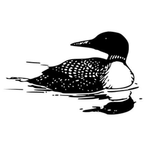 pin common loon coloring page on pinterest