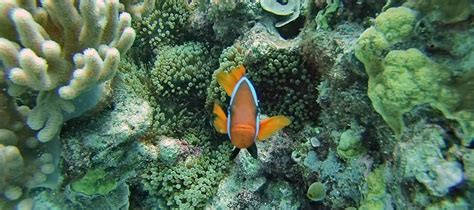 best place to dive the great barrier reef the best place to dive the great barrier reef for all