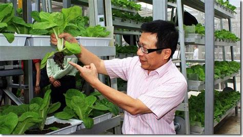vertical farming singapores solution  feed  local