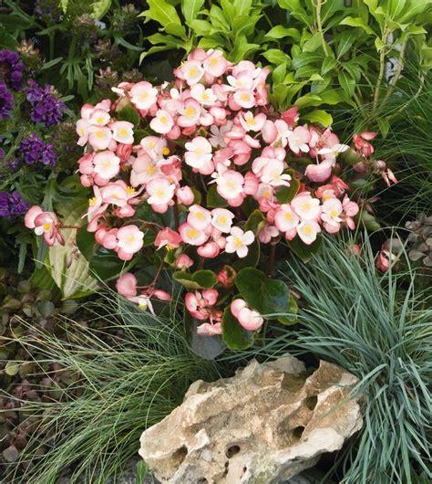 fiori e giardini fiori da giardino guida con le variet 224 vivono anche