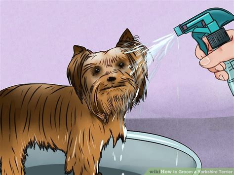 how to bathe a yorkie terrier how to groom a terrier with pictures wikihow