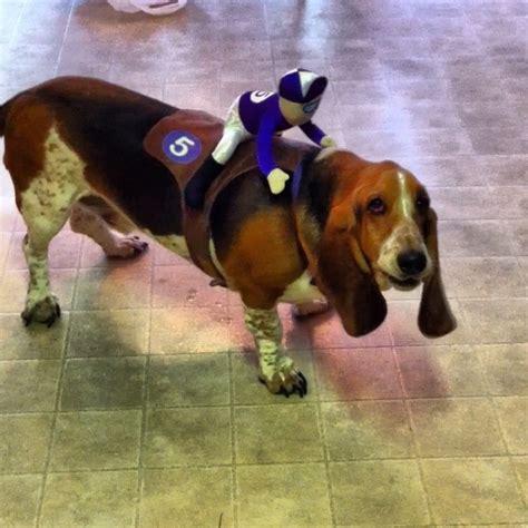 costumes  prove basset hounds  win  halloween