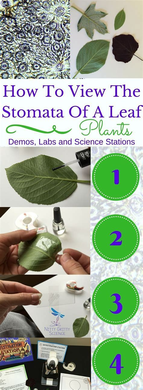 ls made from leaves 17 best images about science for secondary grades biology