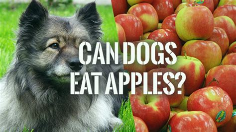 can dogs eat caramel can dogs eat apples pet consider