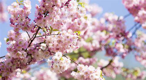 spring start start your spring revival