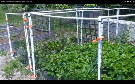 pvc raised garden beds how to fence your raised bed garden using pvc