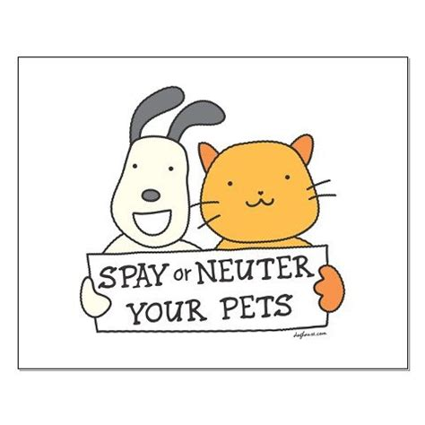 what is neutering a spay neuter animal rescue league of berks county