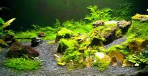 greenleaf splindid aquascape n mini moss