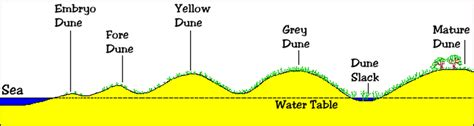 sand dune cross section coasts of erosion and coast of deposition the british